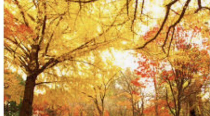 Training in den Herbstferien